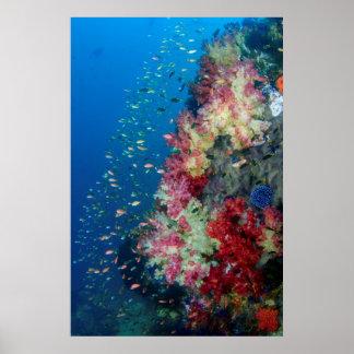 Poster Récif coralien sous-marin, Indonésie