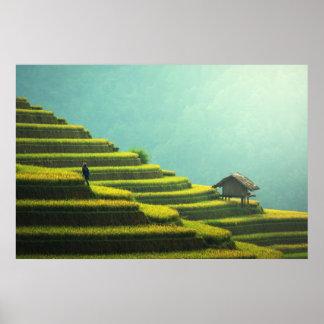 Poster Récolte de riz d'agriculture de la Chine