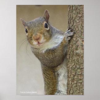 Poster Regarder l'écureuil fixement