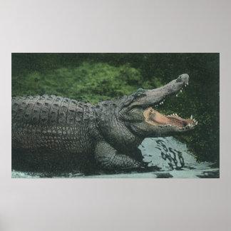 Poster Reptiles vintages de crocodile, faune marine