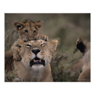 Poster Réservation nationale de Mara de lion et de masai