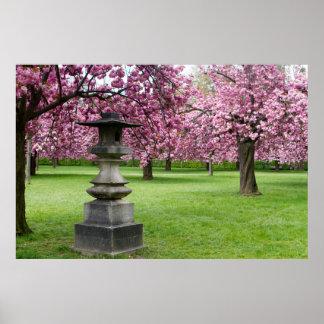 Poster Ressort dans des fleurs de cerisier de Paris