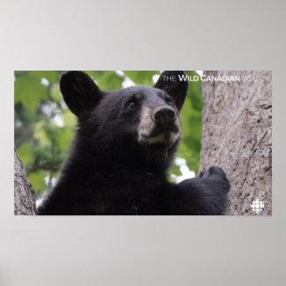 Poster Ressort - ours noir