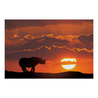 Poster Rhinocéros au coucher du soleil, masai Mara, Kenya