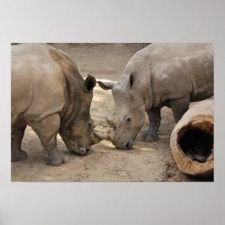 Poster Rhinocéros de zoo d'Albuquerque
