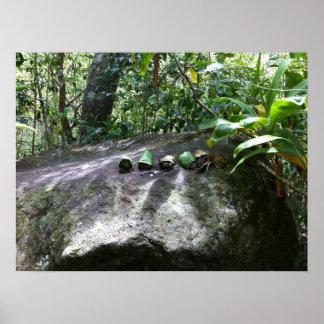 Poster Roches enveloppées dans le feuille de Ti, Maui,