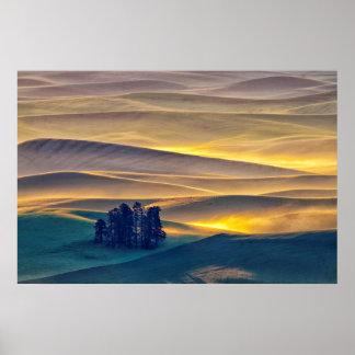 Poster Rolling Hills de blé au lever de soleil | WA