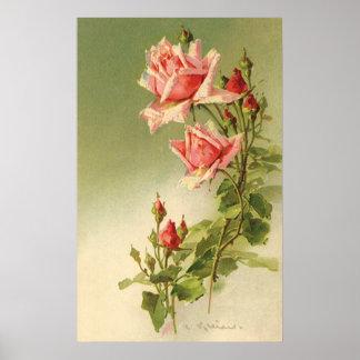 Poster Roses roses vintages de jardin pour la
