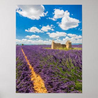 Poster Ruine dans le domaine de lavande, France