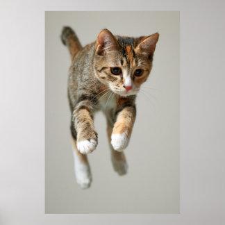 Poster Sauter de chat de calicot