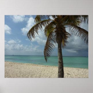 Poster Scène de nature de la plage I d'Aruban belle