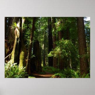 Poster Séquoias et fougères au parc national de séquoia