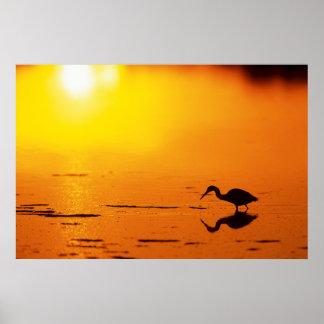 Poster Silhouette de héron au coucher du soleil, la