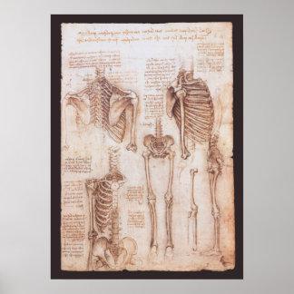 Poster Squelettes humains d'anatomie par Leonardo da