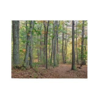 Poster Sur Bois Bois de Walden :