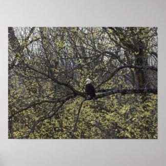 Poster Surveillance d'Eagle Painterly