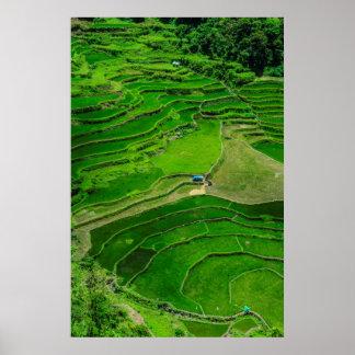Poster Terrasses vertes de riz, Philippines