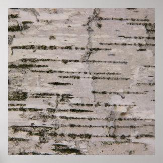 Poster Texture d'arbre de bouleau