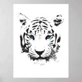 Poster Tigre blanc avec des yeux bleus