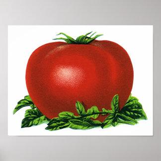 Poster Tomate mûre rouge vintage, légumes et fruits
