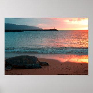 Poster Tortue sur une plage tropicale de Sandy à
