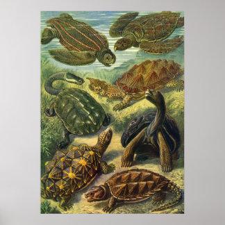 Poster Tortue vintage de terre de tortues de mer par