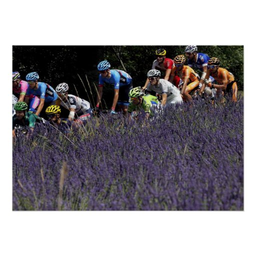 Poster Tour de France dans les lavandes