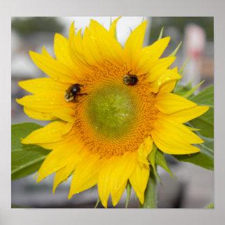 Poster Tournesol avec des abeilles