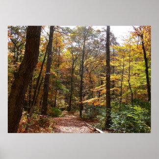 Poster Traînée ensoleillée d'automne en parc d'état de
