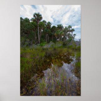 Poster Traînée et hamac inondés, prairie de Kissimmee, FL
