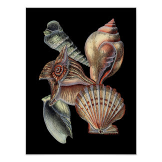 Poster Trésors de la mer