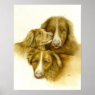 Poster Trois chiens de chien d'arrêt de Tolle de canard