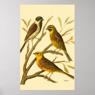 Poster Trois oiseaux domestiques étés perché sur une