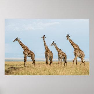 Poster Troupeau de girafe dans la prairie
