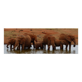 Poster Troupeau d'éléphants à un trou d'eau