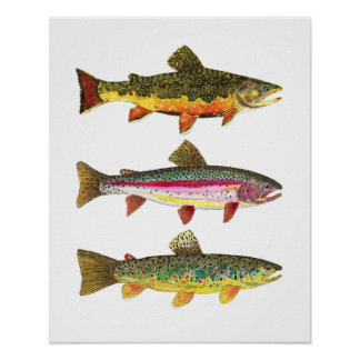 Poster Truite 3 pour des pêcheurs et des Fisherwomen de