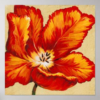Poster Tulipe de perroquet I