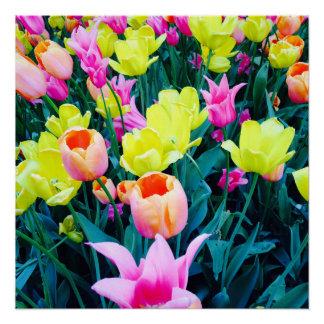 Poster Tulipes dans la ville