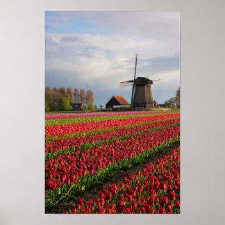 Poster Tulipes rouges et un moulin à vent