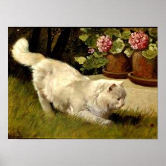Poster Un chat persan blanc observant une coccinelle