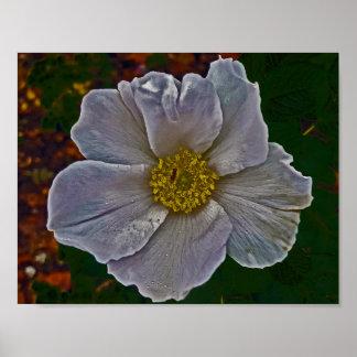 Poster Une fleur de rose de chien