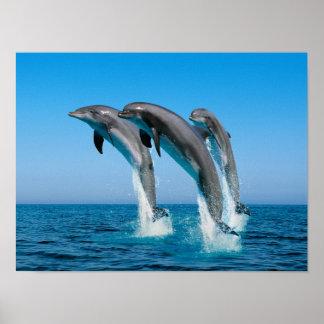 Poster Vers le haut des dauphins hauts hauts