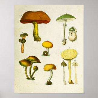 Poster Vert 1839 jaune d'impression d'art de champignons