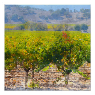 Poster Vignoble dans Napa Valley la Californie