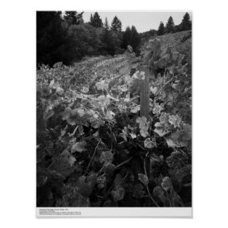 Poster Vignoble et collines, Draper Vineyard, 1966