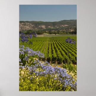 Poster Vignoble vert et fleurs pourpres
