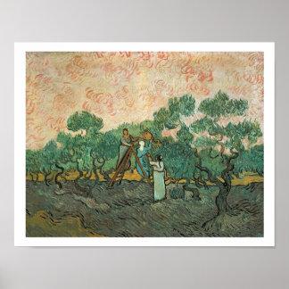 Poster Vincent van Gogh | les récolteuses olives,