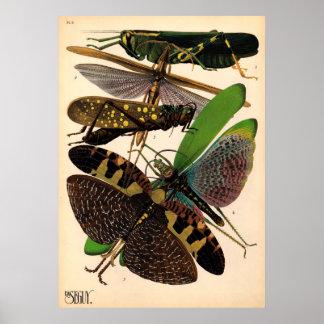 Poster vintage d'insectes de Seguy