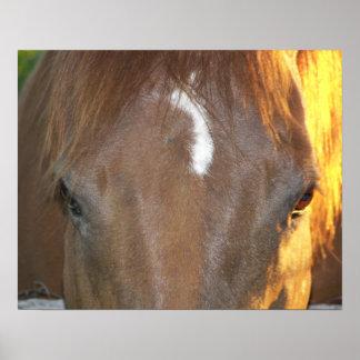 Poster Visage de cheval
