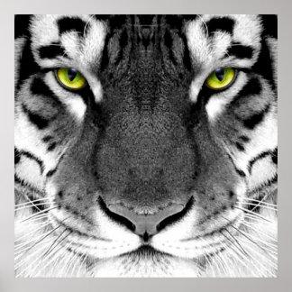 Poster Visage de tigre - tigre blanc - tigre de yeux -